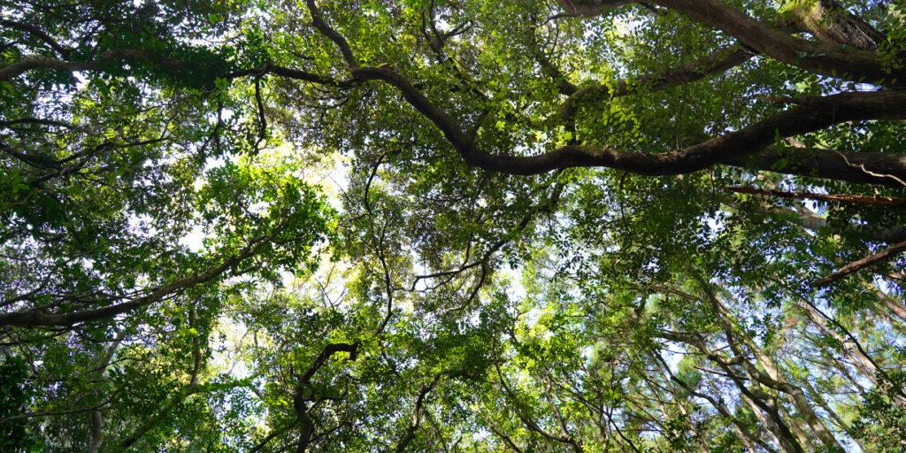 屋久島雫ノ杜は自然に囲まれています