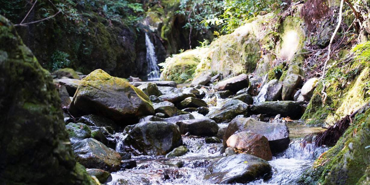 屋久島雫ノ杜の近くには川が流れています